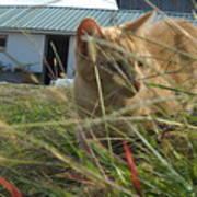 Honeysuckle Cat Hunting Poster