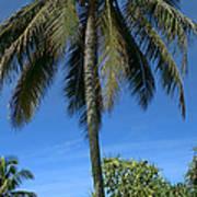Honomaele Kahanu Gardens Hale O Piilani Ulaino Hana Maui Hawaii Poster