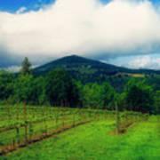 Hood River Oregon - Cloud Burst Over The Vineyard Poster