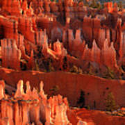 Hoodoos Of Sunset Point At Sunrise  In Bryce Canyon Poster