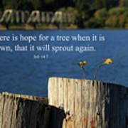Hope For A Tree Poster