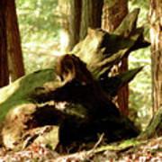 Horned Tree Poster