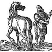 Horse & Groom Poster