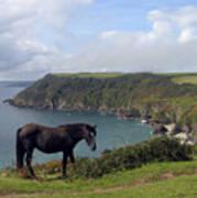 Horse Along Coastal Path Cornwall Poster