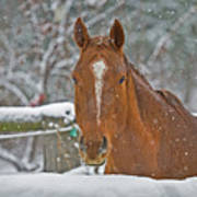 Horse And Snowflakes Poster
