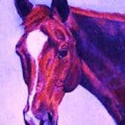 Horse Art Horse Portrait Maduro Pink And Purple Poster