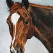Horse Art Portrait Of Horse Maduro Poster