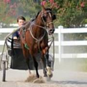 Horse Carriage Racing In Delmarva Poster