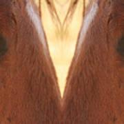 Horse Eyes Love Poster