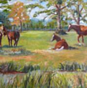 Horse Farm In Georgia Poster