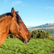 Horse Head Closeup Poster