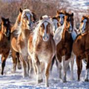 Horse Herd In Snow Poster