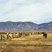 Horse In Eastern Sierras Poster