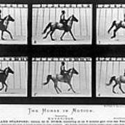 Horse In Motion, 1878 Poster