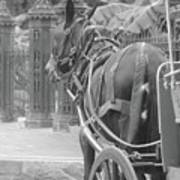 Horse In The Quarter Poster