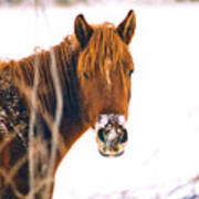 Horse In Winter Poster