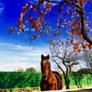 Horse Poster by Niki Mastromonaco