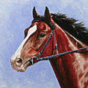 Horse Painting - Determination Poster by Crista Forest