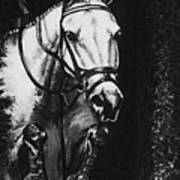 Horse Painting  Jumper No Faults Black And White Poster