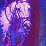 Horse Painting Jumper No Faults Purple And Blue Poster