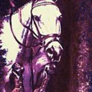 Horse Painting Jumper No Faults Purple Poster