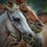 Horse Pair Poster