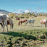 Horse Pasture Poster