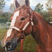 Red Dun Horse - Reds Done Dancin By Marilyn Nolan-johnson Poster