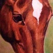 Horse Portrait Horse Head Red Close Up Poster