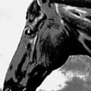 horse portrait PRINCETON black and white Poster