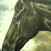 horse portrait PRINCETON bright light Poster