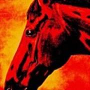 horse portrait PRINCETON sunset Poster