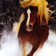 Horse Running In Snow Poster