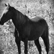 Horse Scope Poster by Debra     Vatalaro