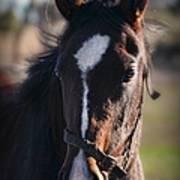 Horse Whispering Poster