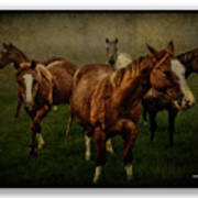 Horses 31 Poster