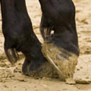 Horses Feet Poster