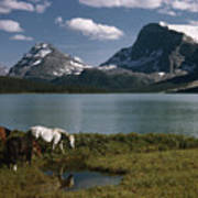 Horses Graze In A Lakeside Meadow Poster
