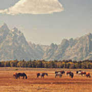 Horses Grazing In Front Of The Teton's Poster