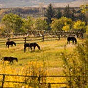Horses Grazing In The Late Afternoon Poster