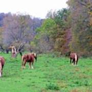 Horses In Autumn Amish Country Poster