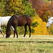Horses In Autumn Poster