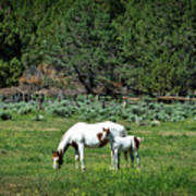 Horses In Meadow - California Poster