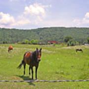 Horses In The Pasture Poster