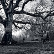 Horses On A Foggy Morning In Black And White Poster