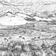 Horses On Summer Range Field Sketch Poster