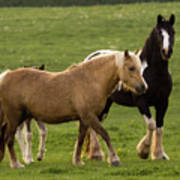 Horses Photography Poster