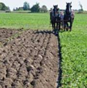 Horses Plowing Rows  Poster