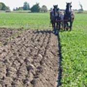 Horses Plowing Rows Two  Poster