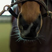 Horse Whiskers Poster